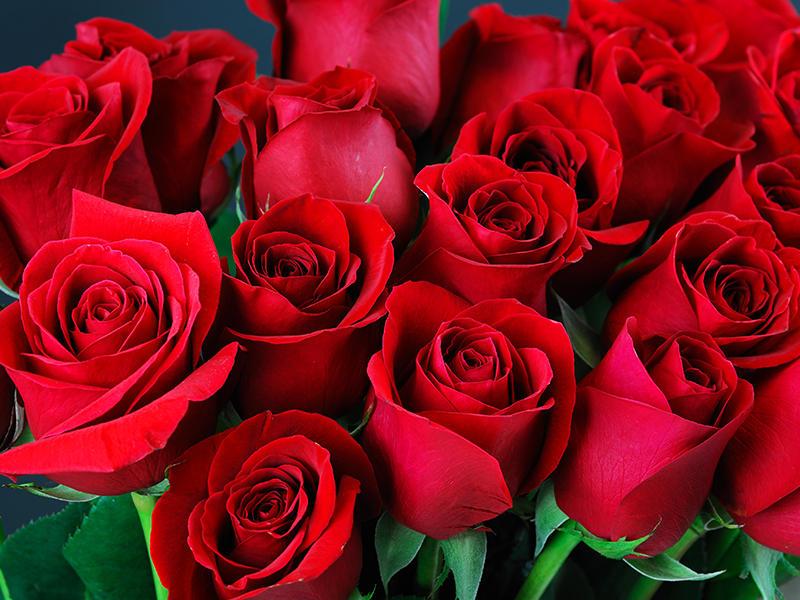 Anniversario Matrimonio Quante Rose.Quante Rose Si Regalano Scopriamolo Insieme Articoli Da