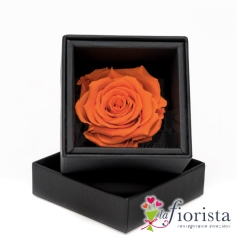 Flower box Rosa Arancio Stabilizzata