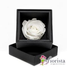 Rosa Bianca Stabilizzata Flower box