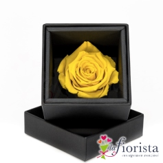 Rosa Gialla Stabilizzata Flower box