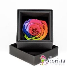 Flower box Rosa arcobaleno