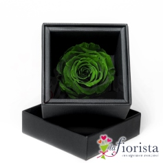 Flower box Rosa Verde Stabilizzata