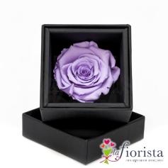 Flower box Rosa Viola Stabilizzata