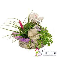 Cestino di piante verdi e fiorite