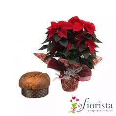 Pan Talento e Stella di Natale