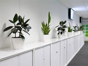 Consegna fiori a domicilio piante da appartamento con - Pianta da ufficio ...
